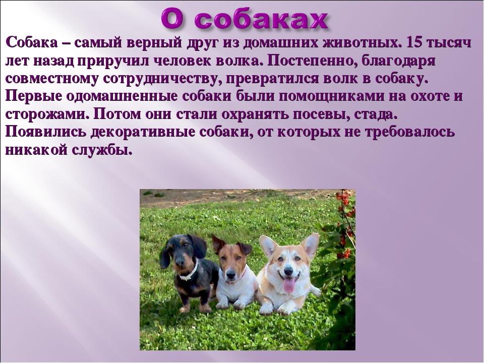 Описание домашнего питомца собаки