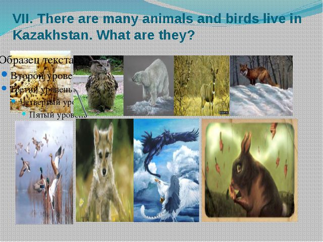 VII. There are many animals and birds live in Kazakhstan. What are they?