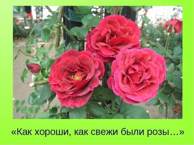 «Как хороши, как свежи были розы…»