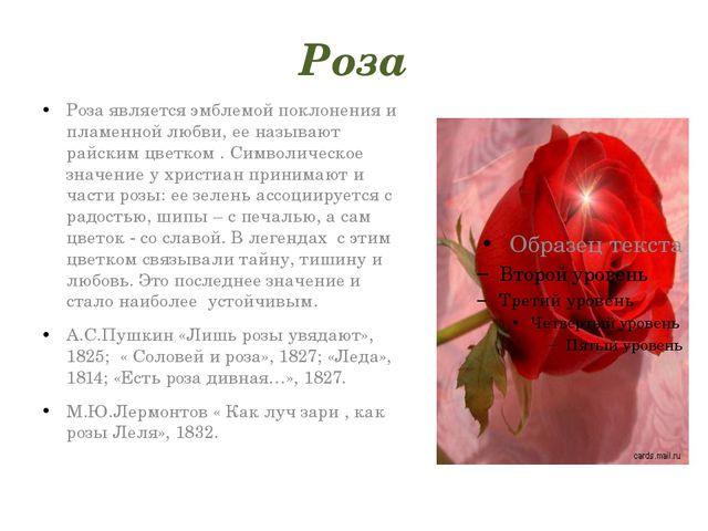 Роза Роза является эмблемой поклонения и пламенной любви, ее называют райским...