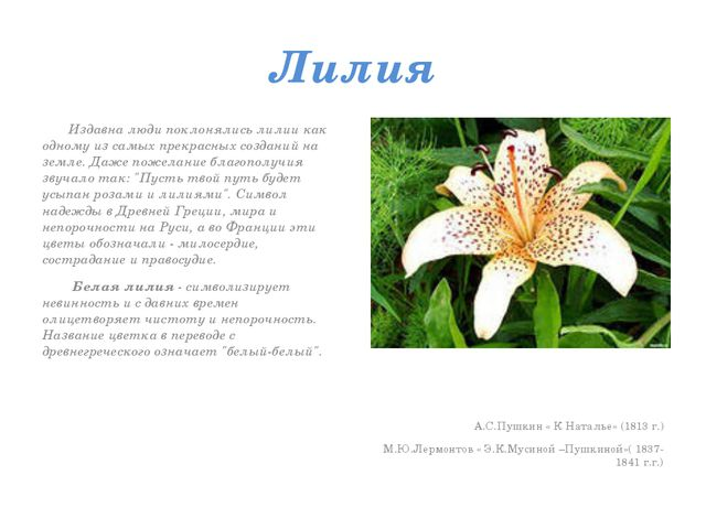 Лилия Издавна люди поклонялись лилии как одному из самых прекрасных созданий...