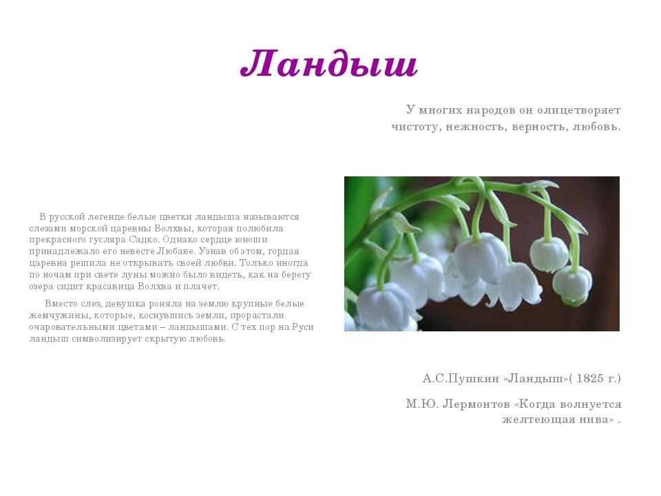 Ландыш В русской легенде белые цветки ландыша называются слезами морской царе...
