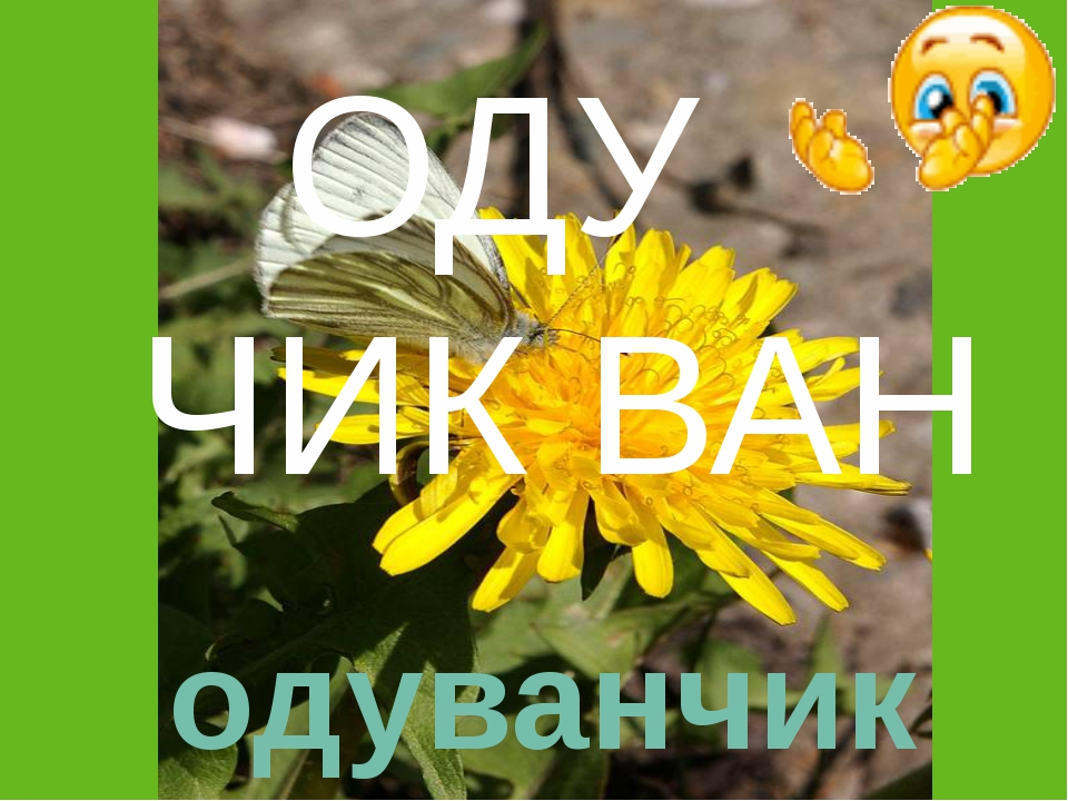 ОДУ ЧИК ВАН одуванчик