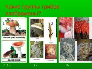 Какие группы грибов изображены? 1 - 2 - 3- 23 1 2 3