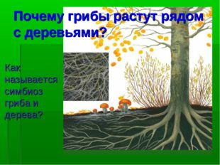 Почему грибы растут рядом с деревьями? Как называется симбиоз гриба и дерева?