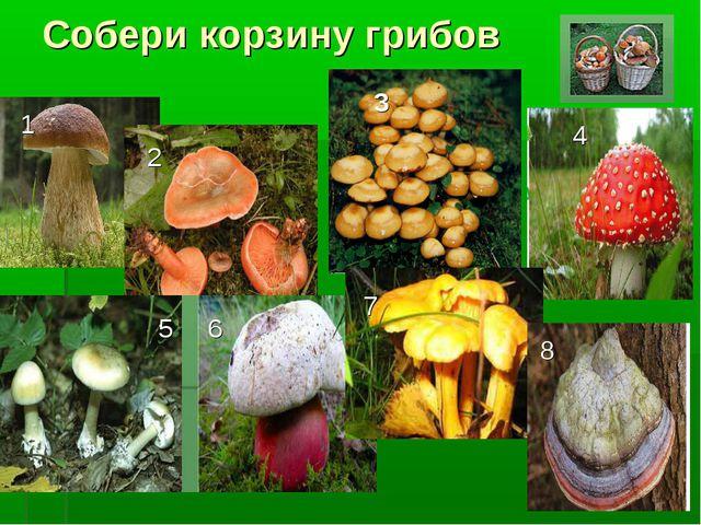 Собери корзину грибов 1 2 3 4 5 6 7 8