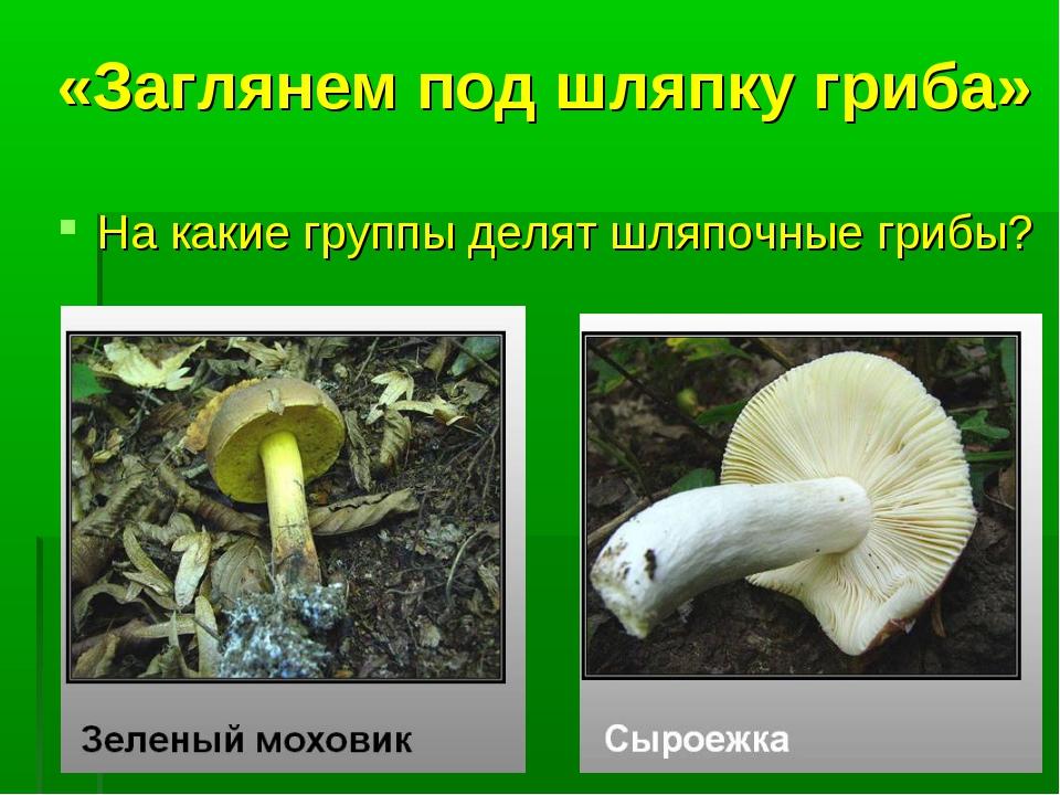 «Заглянем под шляпку гриба» На какие группы делят шляпочные грибы?