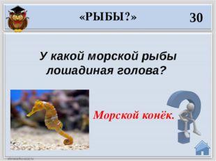 40 Назовите рыб, которые носят названия городов? Судак,Елец, Калуга. «РЫБЫ?»