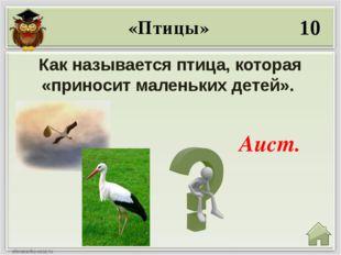30 Какой птицей называют обратную сторону монеты? Орёл. «Птицы»