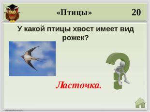 40 Какая птица в русских народных сказках имеет золотое оперение? Жар- птица.