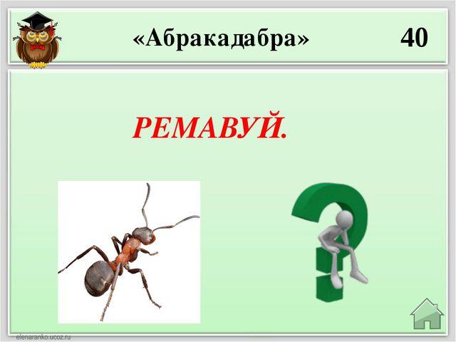 10 Енот, зубр, барсук, рысь, антилопа «Угадай, кто это?» Зебра