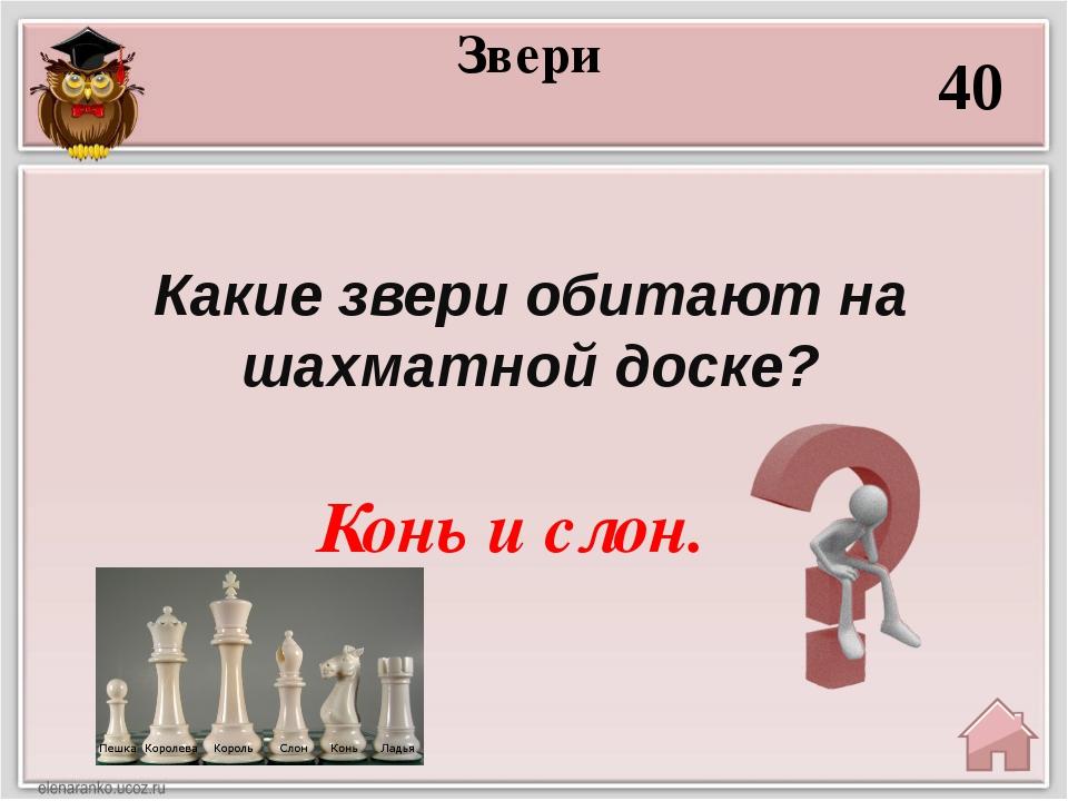 «Абракадабра» 10 НЬФИЛЕД