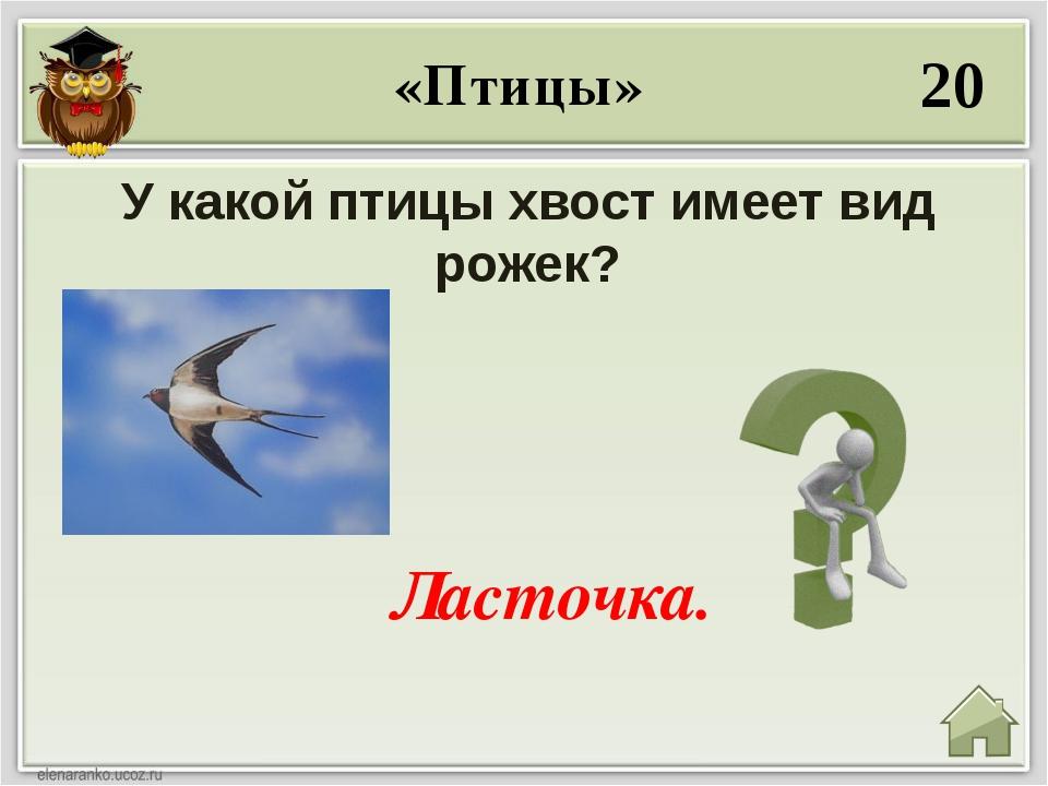 40 Какая птица в русских народных сказках имеет золотое оперение? Жар- птица....