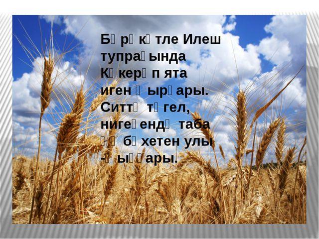 Бәрәкәтле Илеш тупрағында Күкерәп ята игенҡырҙары. Ситтә түгел, нигеҙендә та...