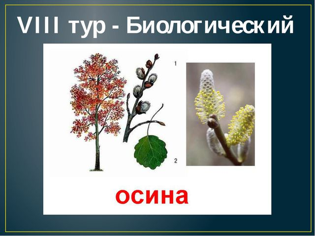 VIII тур - Биологический