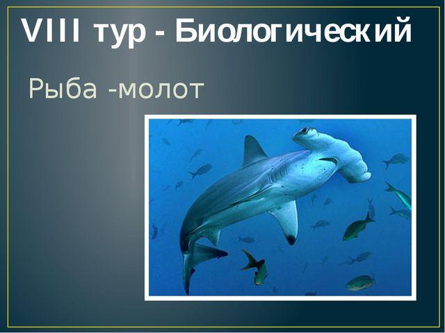 VIII тур - Биологический Рыба -молот