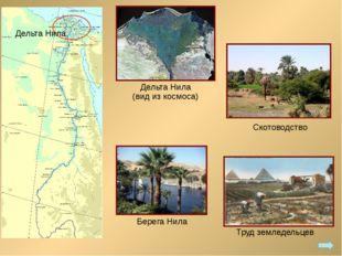 Дельта Нила (вид из космоса) Труд земледельцев Скотоводство Берега Нила Дельт