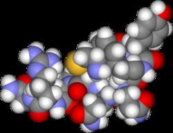 Arginine vasopressin3d.png