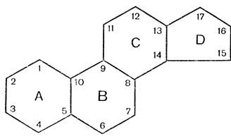 Рис. 15. Циклопентанпергидрофенантреновое ядро