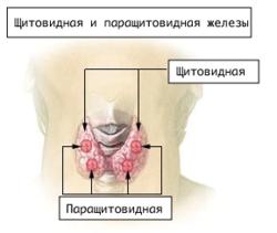 https://upload.wikimedia.org/wikipedia/commons/thumb/0/09/Illu_thyroid_parathyroid_ru.png/250px-Illu_thyroid_parathyroid_ru.png