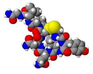 https://upload.wikimedia.org/wikipedia/commons/thumb/9/96/Oxytocin3d.png/300px-Oxytocin3d.png