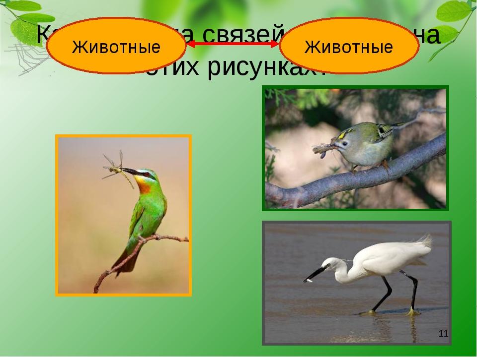 Какая группа связей показана на этих рисунках? Животные Животные *