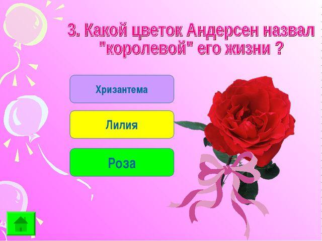 Хризантема Лилия Роза