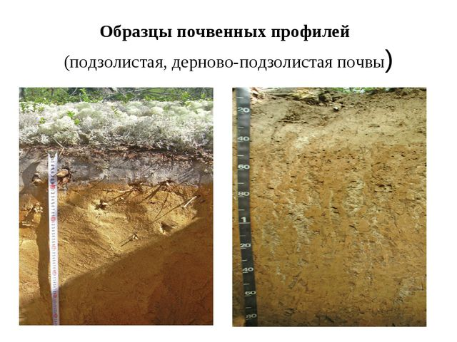 Образцы почвенных профилей (подзолистая, дерново-подзолистая почвы)