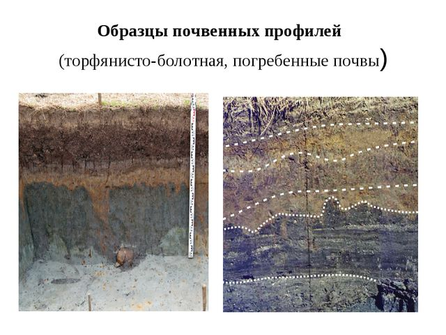 Образцы почвенных профилей (торфянисто-болотная, погребенные почвы)