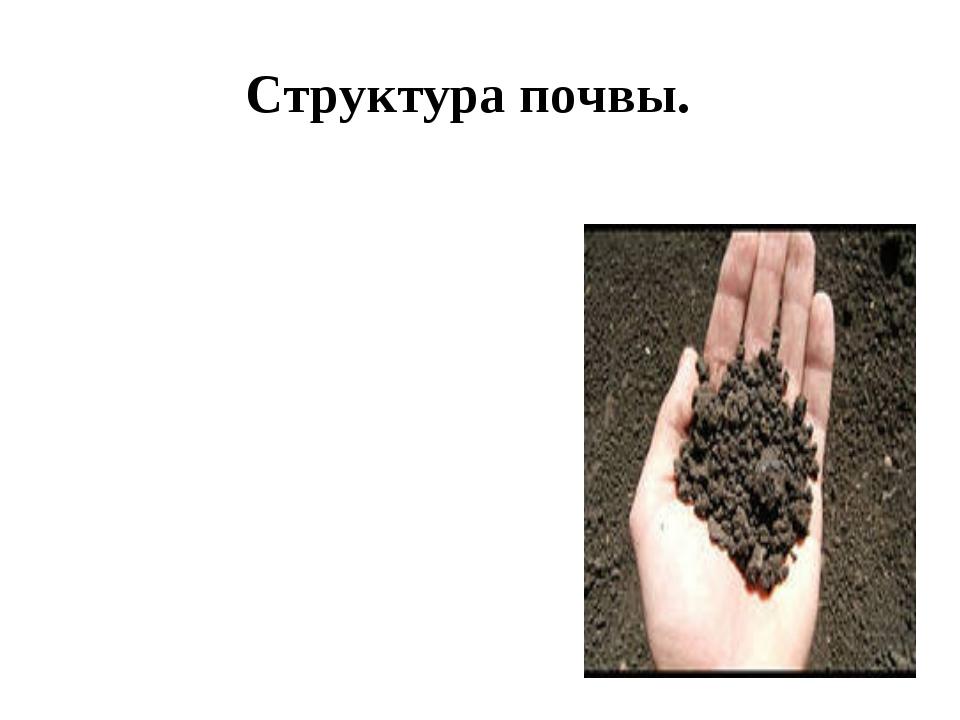 Структура почвы.