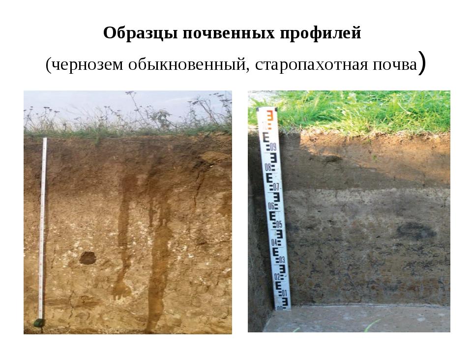 Образцы почвенных профилей (чернозем обыкновенный, старопахотная почва)