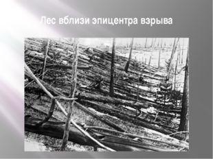 Лес вблизи эпицентра взрыва