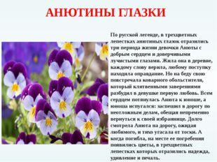 АНЮТИНЫ ГЛАЗКИ По русской легенде, в трехцветных лепестках анютиных глазок о