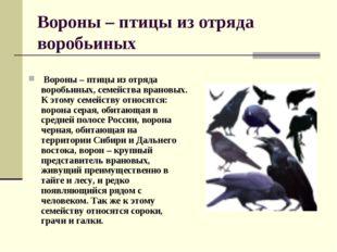 Вороны – птицы из отряда воробьиных Вороны – птицы из отряда воробьиных, семе
