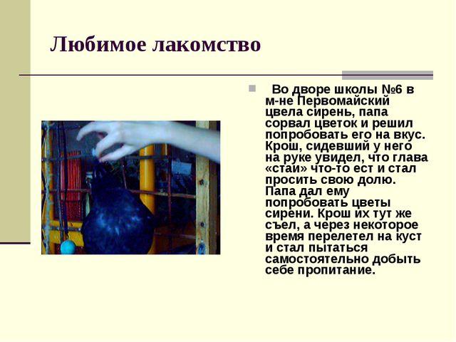 Любимое лакомство Во дворе школы №6 в м-не Первомайский цвела сирень, папа со...