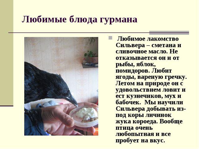 Любимые блюда гурмана Любимое лакомство Сильвера – сметана и сливочное масло....