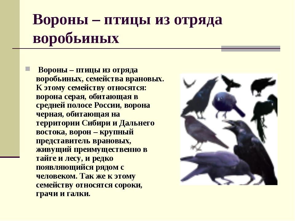 Вороны – птицы из отряда воробьиных Вороны – птицы из отряда воробьиных, семе...
