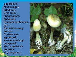 Скромный, тоненький и бледный... Этот гриб, представьте, вредный. Попадёт г