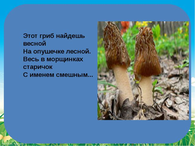 Этот гриб найдешь весной На опушечке лесной. Весь в морщинках старичок С имен...