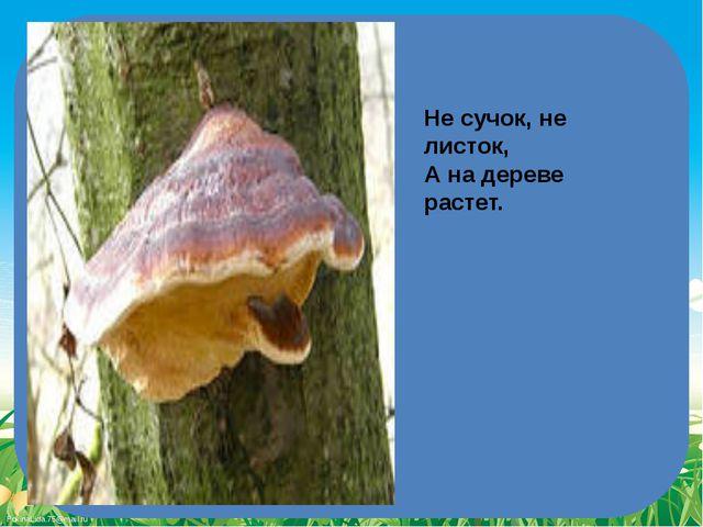 Не сучок, не листок, А на дереве растет. FokinaLida.75@mail.ru