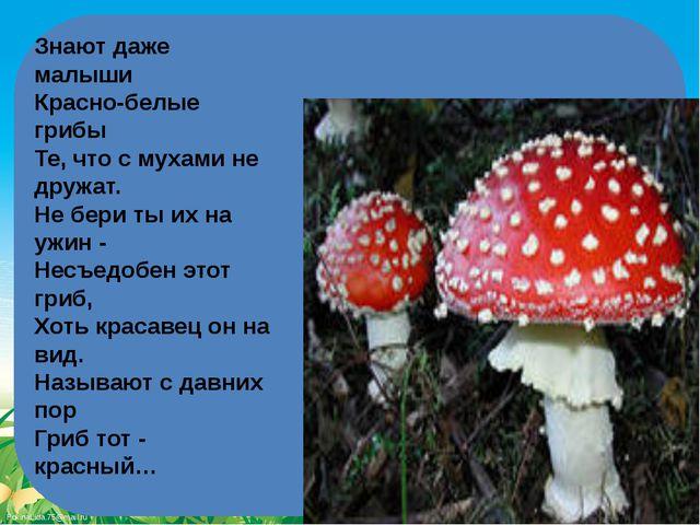 Знают даже малыши Красно-белые грибы Те, что с мухами не дружат. Не бери т...