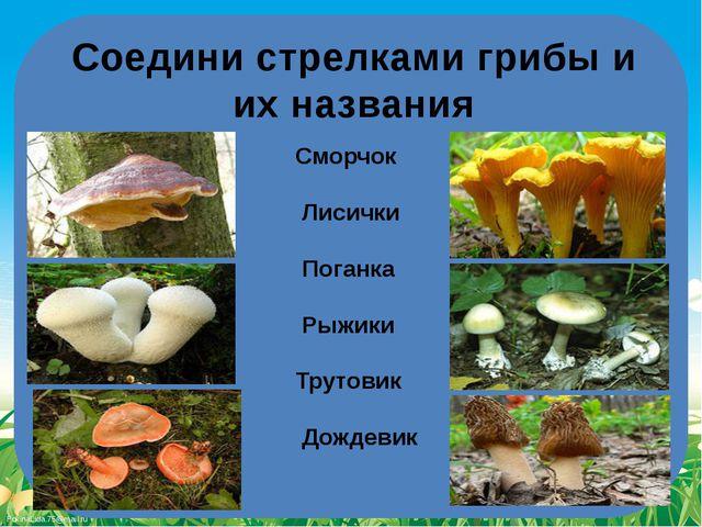 Соедини стрелками грибы и их названия Сморчок Лисички Поганка Рыжики Трутовик...