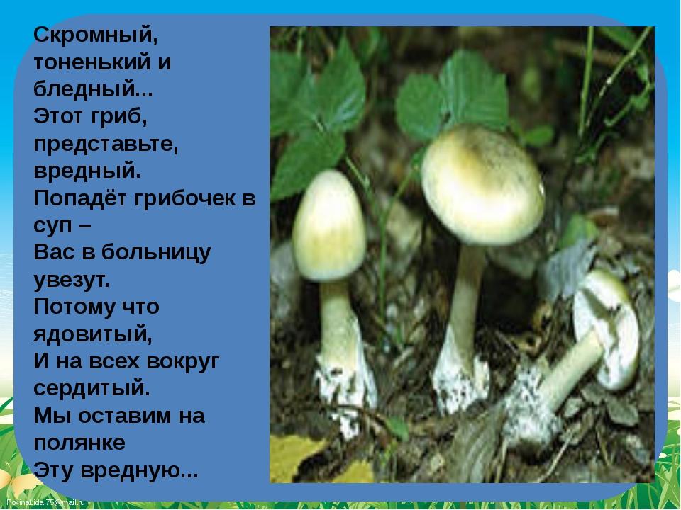 Скромный, тоненький и бледный... Этот гриб, представьте, вредный. Попадёт г...