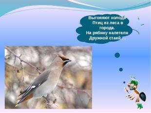 Выгоняют холода Птиц из леса в города. На рябину налетели Дружной стаей …