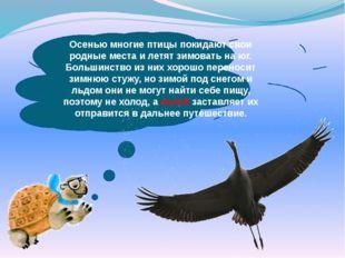 Осенью многие птицы покидают свои родные места и летят зимовать на юг. Больш