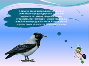 В зимнее время вороны переселяются в ближайшие города и деревни. Здесь они ко