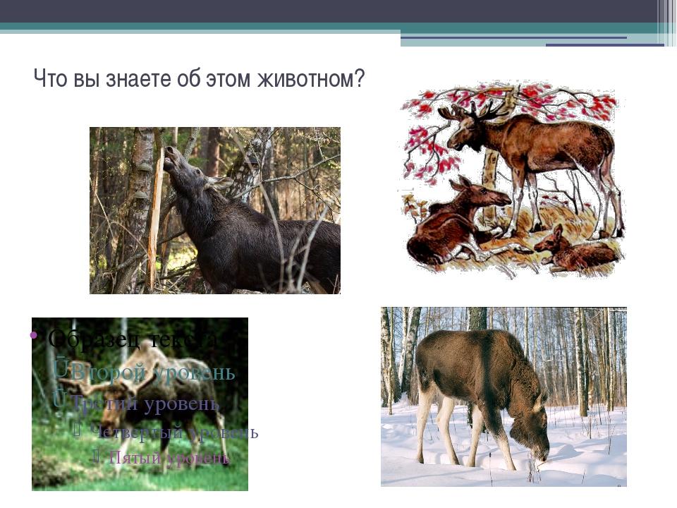 Что вы знаете об этом животном?