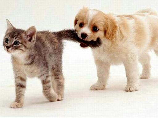 F:\для кр 5 кл\щенок поймал котенка.jpg