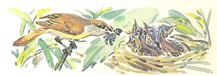 F:\для кр 5 кл\птица кормит птенцов.jpg