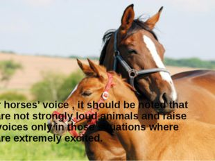 As for horses' voice , it should be noted that they are not strongly loud an